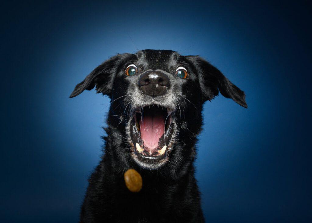 Hundefotografie Leckerchen