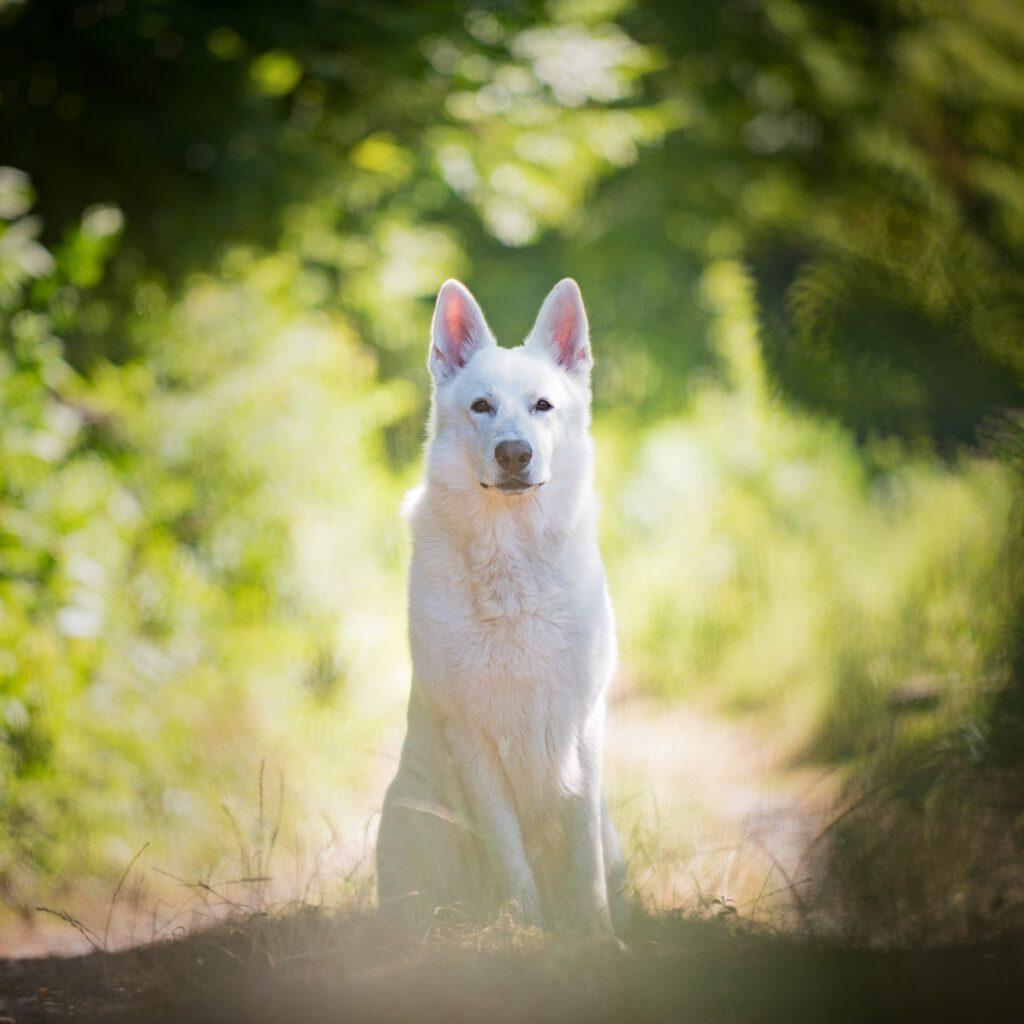 Hundefotografie Schopps